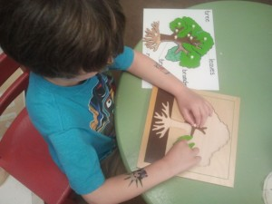 Montessori Work Wynnewood