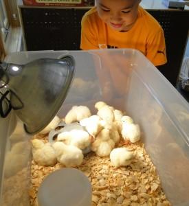 Montessori Preschool Kindergarten Camp